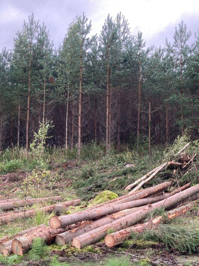 tilitoimisto metsätalous